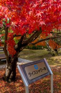 Kyoto02_RiceShower01.jpg